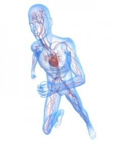 Viden om kroppen - Celler og Væv
